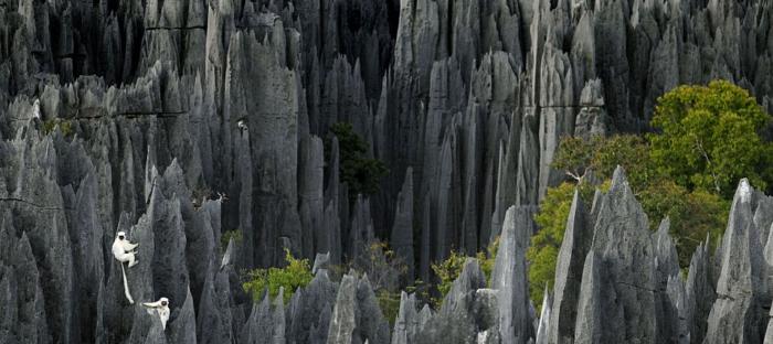 Tsingy the stone knife Forest Madagasca