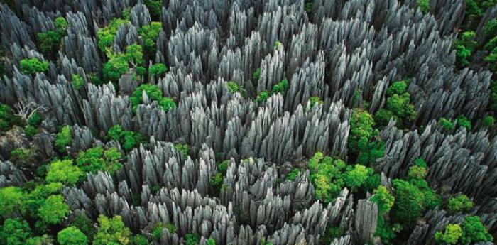 Tsingy the stone knife Forest Madagascar