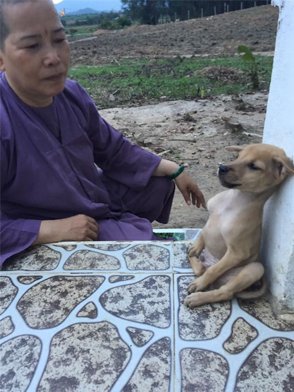 adopted-dogs-cuddle-buddhist-nuns-china-1c