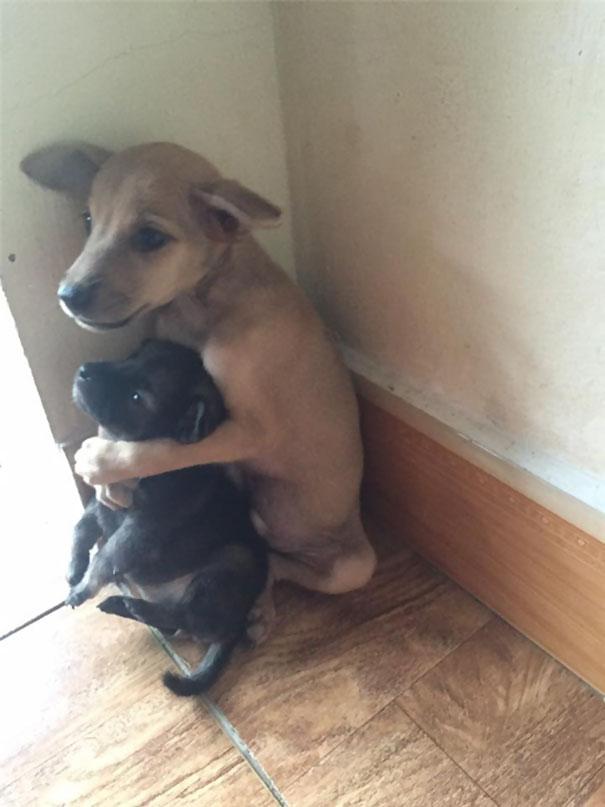 adopted-dogs-cuddle-buddhist-nuns-china-5c