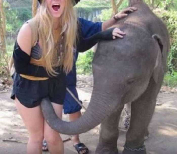 naughy baby elephent with girl