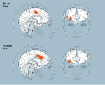Brain perceives rejection and pain