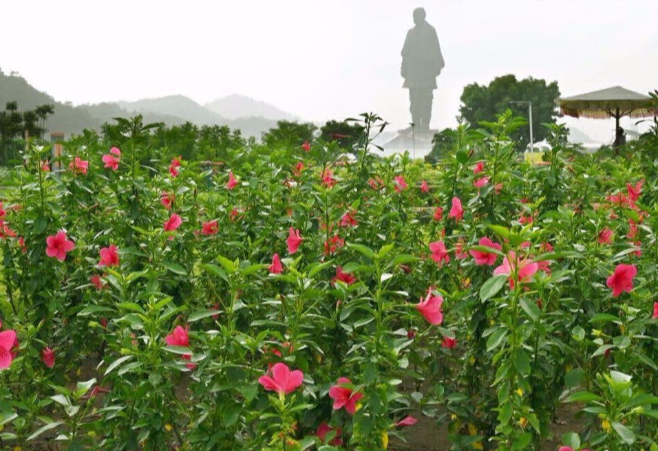 statue-of-unity-view-from-valley-of-flowers