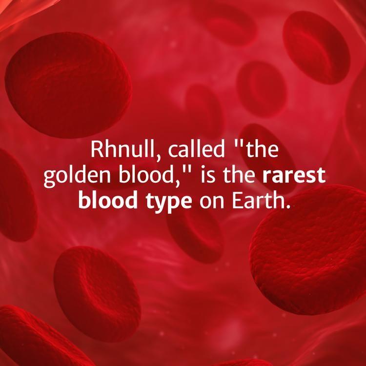 golden blood rhnull