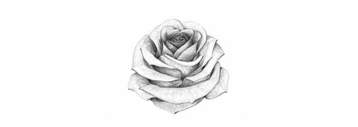 how-to-draw-rose-final