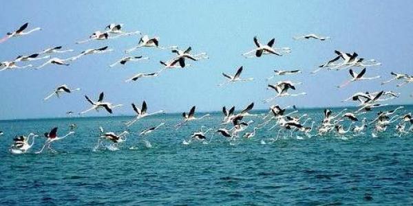 Chilka Lagoon, Odisha